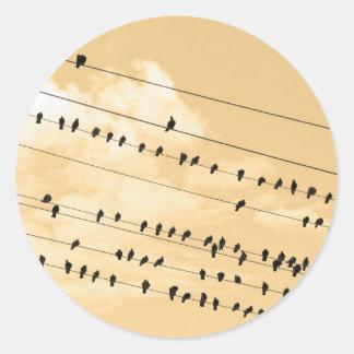 91(1) birds sticker