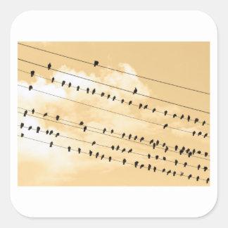 91 (1) pájaros pegatina cuadrada