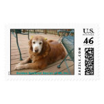 924761922-Grace7, Golden Retriever Rescue of WI... Postage Stamps