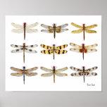 9 acuarelas de la especie de la libélula poster