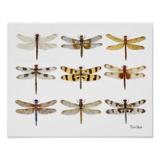 9 acuarelas de la especie de la libélula póster