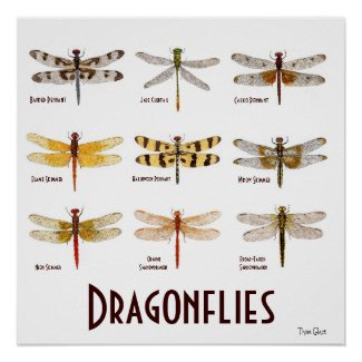 9 Dragonfly Species Poster