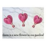 9 hay una nueva flor en nuestro jardín postal