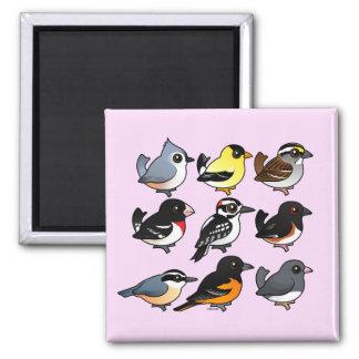 9 Northeast USA Backyard Birds 2 Inch Square Magnet
