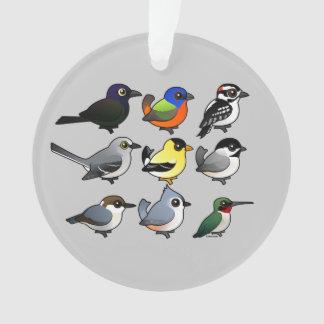 9 pájaros surorientales del patio trasero de los E