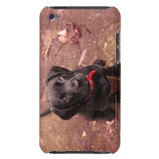 9 Week Old Black Lab Case-Mate iPod Touch Case