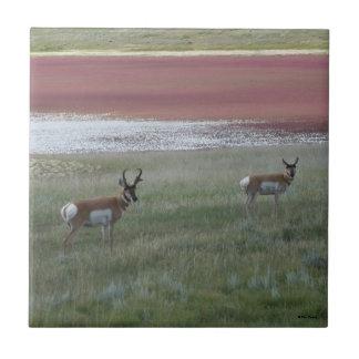 A0002 Pronghorn Antelope Ceramic Tile