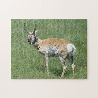 A0003 Pronghorn Antelope Puzzle