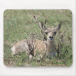 A0007 Baby Pronghorn Antelope Mouse Pad