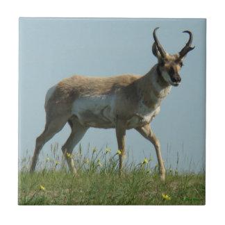 A0010 Pronghorn Antelope Ceramic Tile