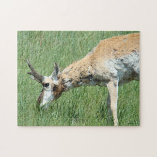 A0011 Pronghorn Antelope Puzzle