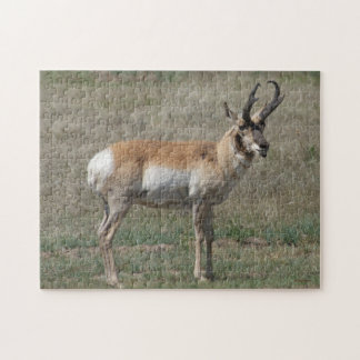 A0015 Pronghorn Antelope Puzzle