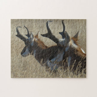 A0023 Pronghorn Antelope Jigsaw Puzzle