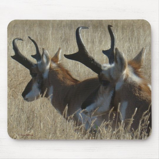 A0023 Pronghorn Antelope Mouse Pad