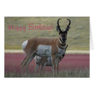 A0024 Pronghorn Antelope Buck Card