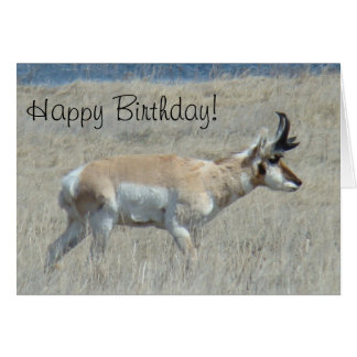 A0025 Pronghorn Antelope Card