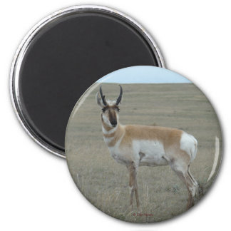 A0028 Pronghorn Antelope magnet