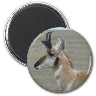 A0029 Pronghorn Antelope magnet