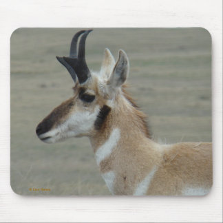 A0029 Pronghorn Antelope mouse pad