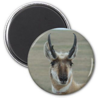 A0030 Pronghorn Antelope magnet
