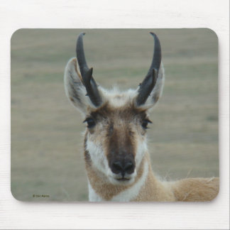 A0030 Pronghorn Antelope mouse pad