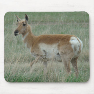 A0031 Pronghorn Antelope Doe mouse pad