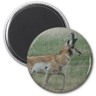 A0032 Pronghorn Antelope magnet