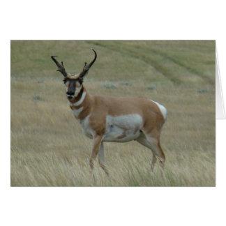 A0033 Pronghorn Antelope Big Buck Greeting Card