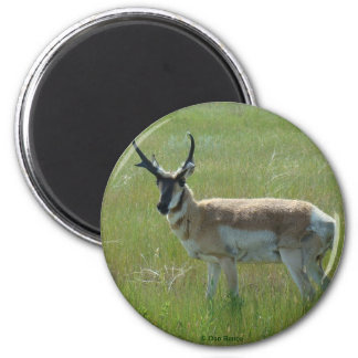 A0036 Pronghorn Antelope 2 Inch Round Magnet