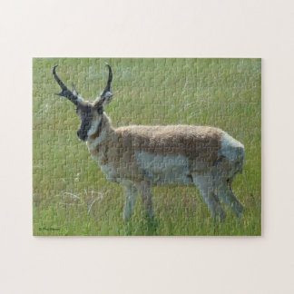 A0036 Pronghorn Antelope Jigsaw Puzzle