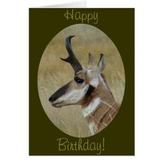 A0038 Pronghorn Antelope Buck Profile Card