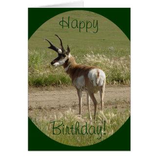 A0039 Pronghorn Antelope Buck Card