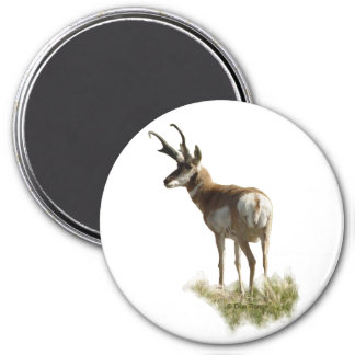 A0043 Pronghorn Antelope Buck 3 Inch Round Magnet