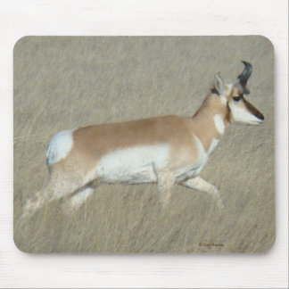 A0044 Pronghorn Antelope Buck Mouse Pad
