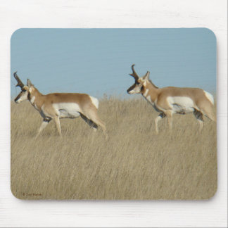 A0045 Pronghorn Antelope Bucks Mouse Pad