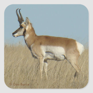 A0046 Pronghorn Antelope Square Sticker