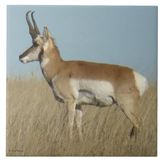 A0046 Pronghorn Antelope Tile
