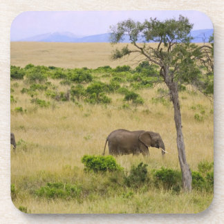 A African Elephant grazing in the fields of the 2 Coaster