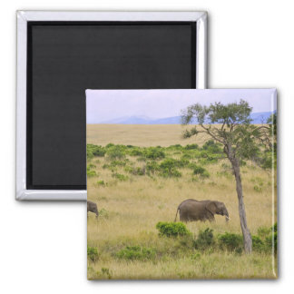 A African Elephant grazing in the fields of the 2 Magnet