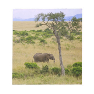 A African Elephant grazing in the fields of the 2 Note Pad