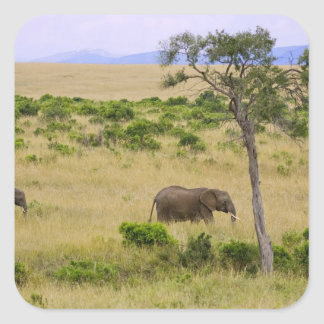 A African Elephant grazing in the fields of the 2 Square Sticker