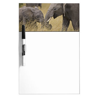 A African Elephant grazing in the fields of the Dry-Erase Whiteboards