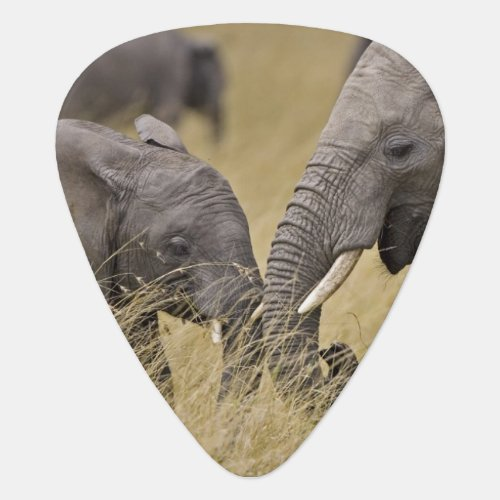A African Elephant grazing in the fields of the Guitar Pick