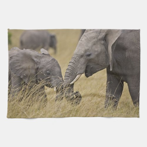 A African Elephant grazing in the fields of the Kitchen Towel