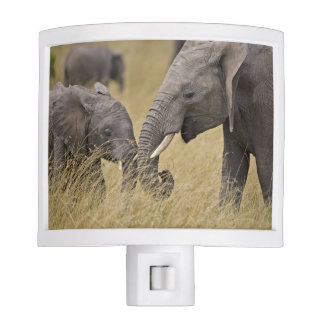 A African Elephant grazing in the fields of the Night Light