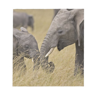 A African Elephant grazing in the fields of the Note Pad