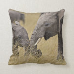 A African Elephant grazing in the fields of the Pillow