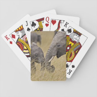 A African Elephant grazing in the fields of the Poker Deck