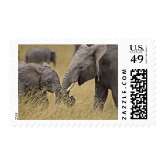 A African Elephant grazing in the fields of the Postage Stamp