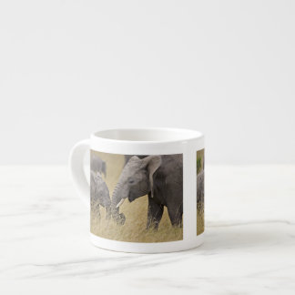 A African Elephant grazing in the fields of the Espresso Cups